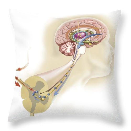 Square Image Throw Pillow featuring the digital art Serotonin Released In The Brain Travels by TriFocal Communications