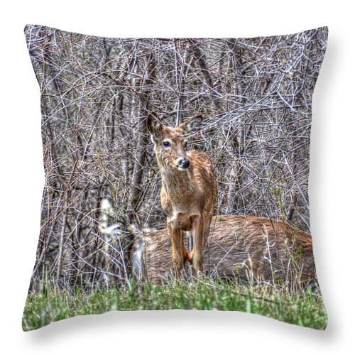 Deer Throw Pillow featuring the photograph Sertoma Park Deer by M Dale