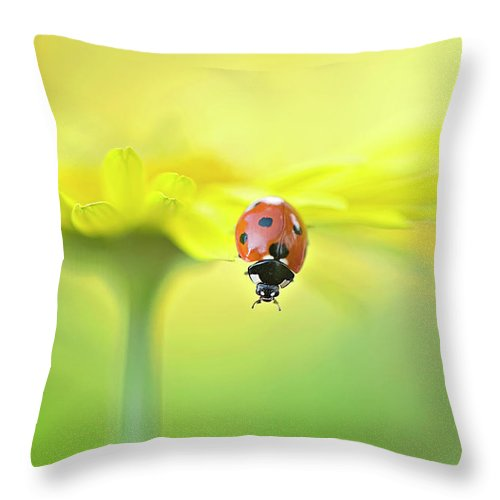 Buckinghamshire Throw Pillow featuring the photograph Seven Spot Ladybird On Yellow Flower by Jacky Parker Photography