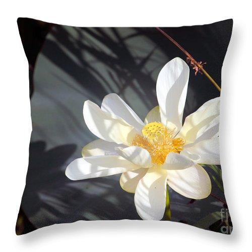 Lotus Throw Pillow featuring the photograph Shadows by Amanda Barcon