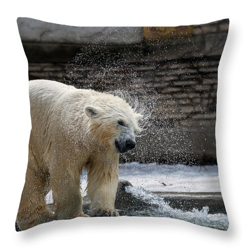 Polar Bears Throw Pillow featuring the photograph Shake It Off by Mark Papke