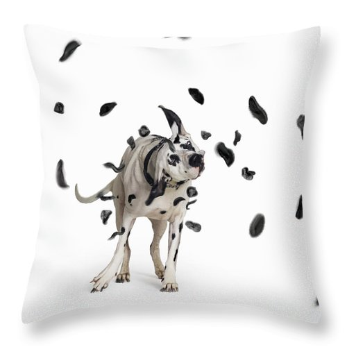 Pets Throw Pillow featuring the photograph Shake The Spots Off by Gandee Vasan