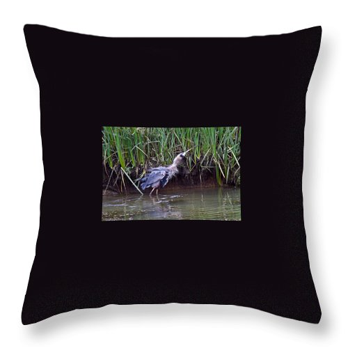 Blue Heron Throw Pillow featuring the photograph Shaken It Big Blue by Brian Williamson