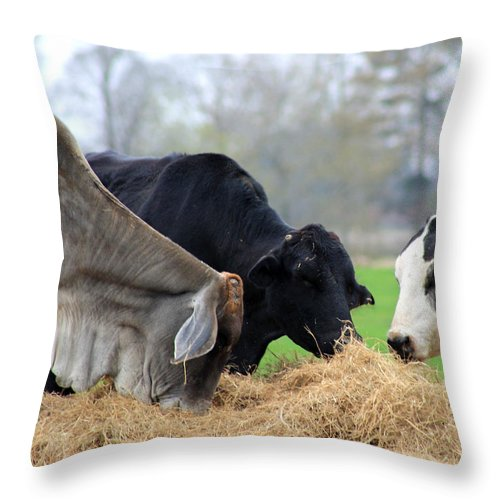 Share Throw Pillow featuring the photograph Share And Share Alike by Mary Koval