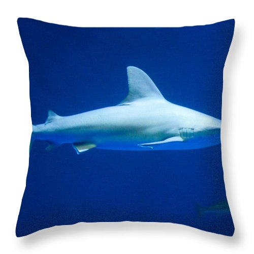 Texas Throw Pillow featuring the photograph Shark In The Spotlight by JG Thompson