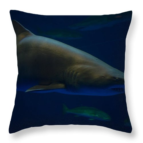 Texas Throw Pillow featuring the photograph Shark On Station by JG Thompson