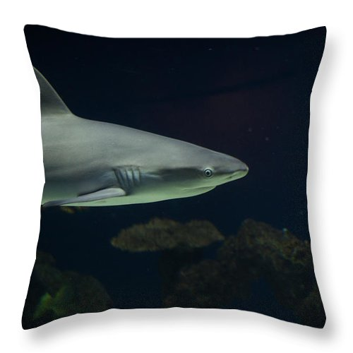 Fish Throw Pillow featuring the photograph Shark by Shaun Wilkinson