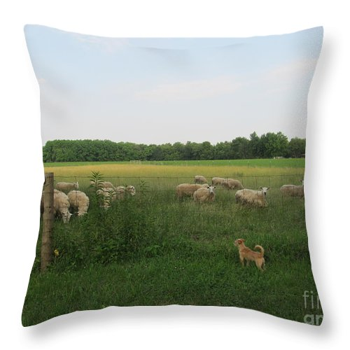 Farm Throw Pillow featuring the photograph Sheep And Dog by Tina M Wenger