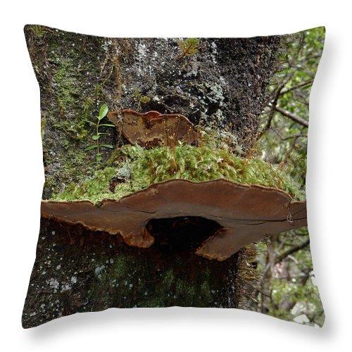 Mushroom Throw Pillow featuring the photograph Shelf Mushroom With Moss by Pamela Walton