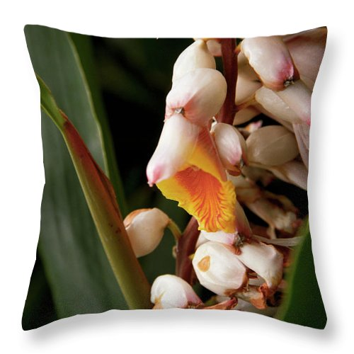 Flowers Throw Pillow featuring the photograph Shell Ginger by Kathy McClure