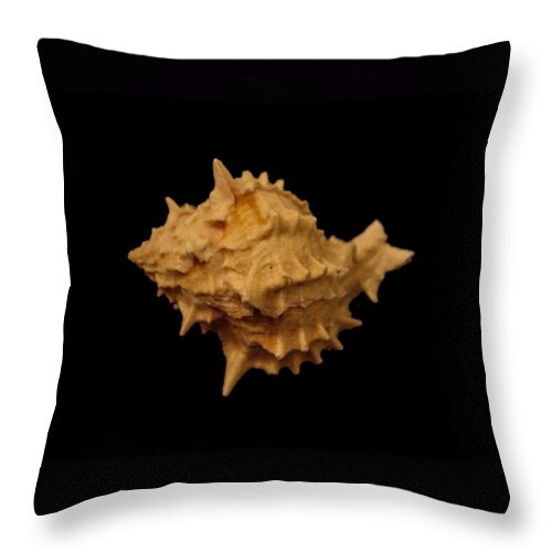 Shells Throw Pillow featuring the photograph Shells Of The Gulf Coast 4 by Mechala Matthews