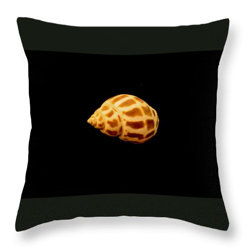 Shells Throw Pillow featuring the photograph Shells Of The Gulf Coast 7 by Mechala Matthews