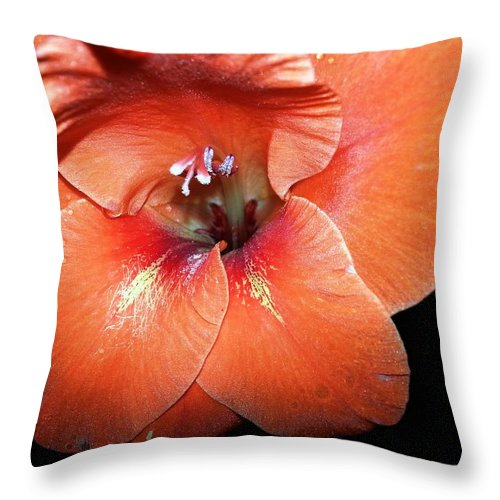 Throw Pillow featuring the photograph Sherbert by Christine Hirtle