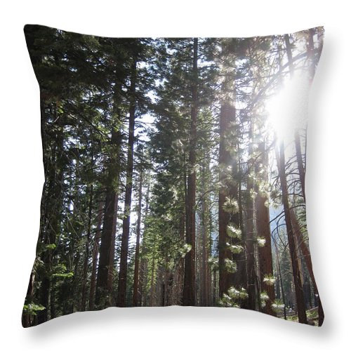 Yosemite Throw Pillow featuring the photograph Shimmering Pines by AC Hamilton