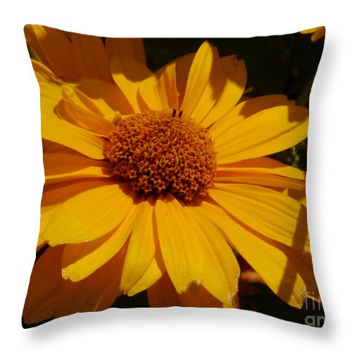 Flower Throw Pillow featuring the photograph Shine On Me by Christiane Schulze Art And Photography