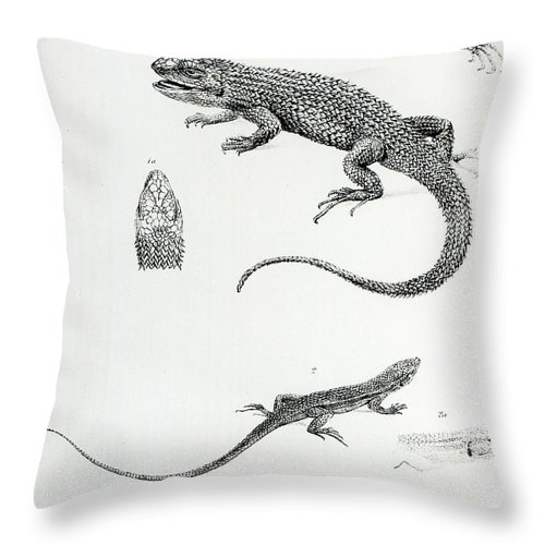 Nature Throw Pillow featuring the painting Shingled Iguana by English School