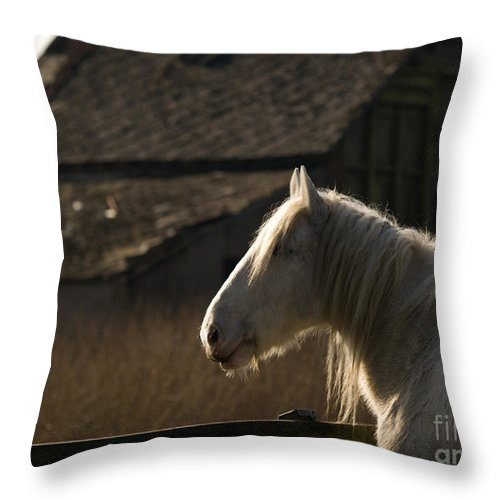Horse Throw Pillow featuring the photograph Shire Horse by Angel Ciesniarska