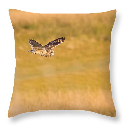 Owl Throw Pillow featuring the photograph Short Eared Owl by Brian Williamson