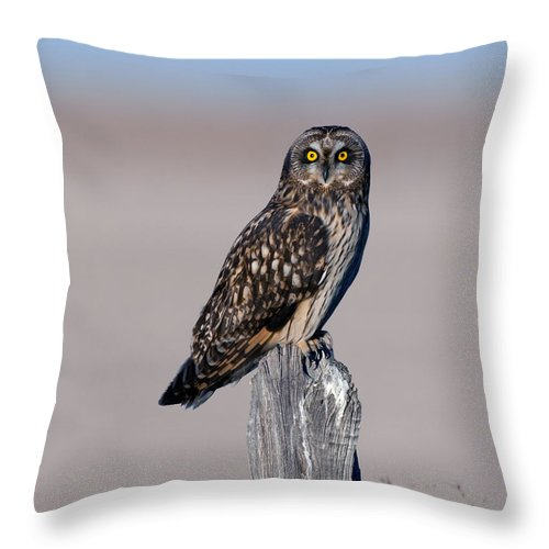 Short Throw Pillow featuring the photograph Short Eared Owl by Gary Langley
