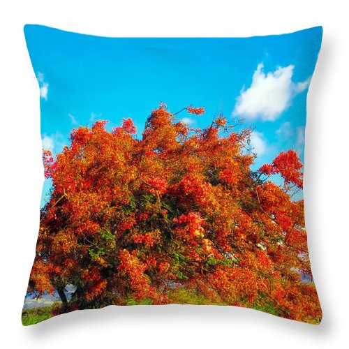 Hawaii Throw Pillow featuring the photograph Shower Tree 18 by Dawn Eshelman