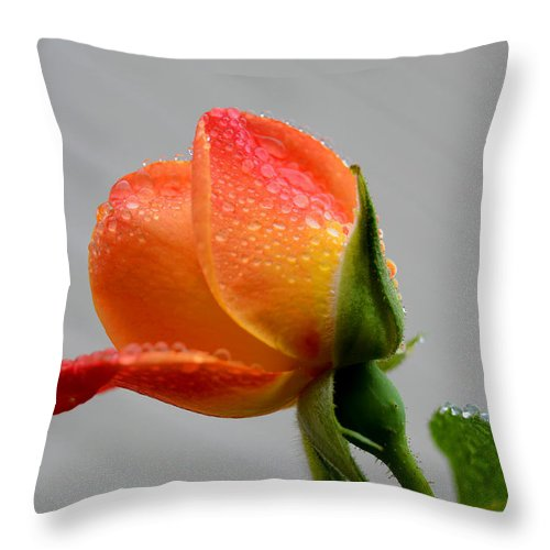 Water Throw Pillow featuring the photograph Showered Rose Bud by David Quist