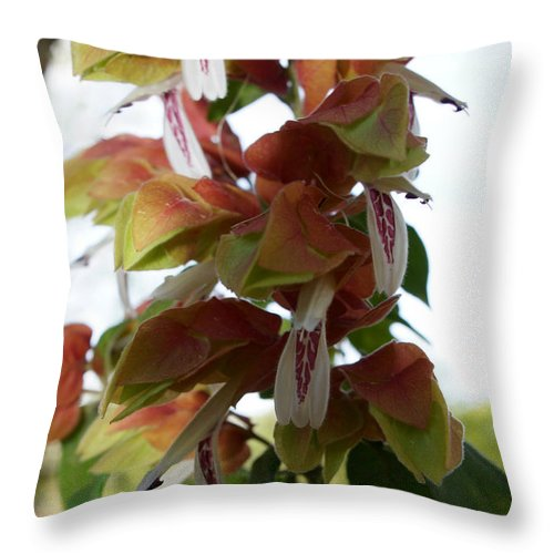 Digital Photography Throw Pillow featuring the photograph Shrimp Plant by Kim Pate