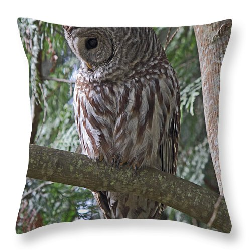 Owl Throw Pillow featuring the photograph Shy by Randy Hall