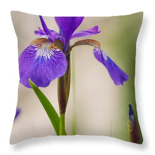 Iris Throw Pillow featuring the photograph Siberian Iris Blossom by Amy Porter