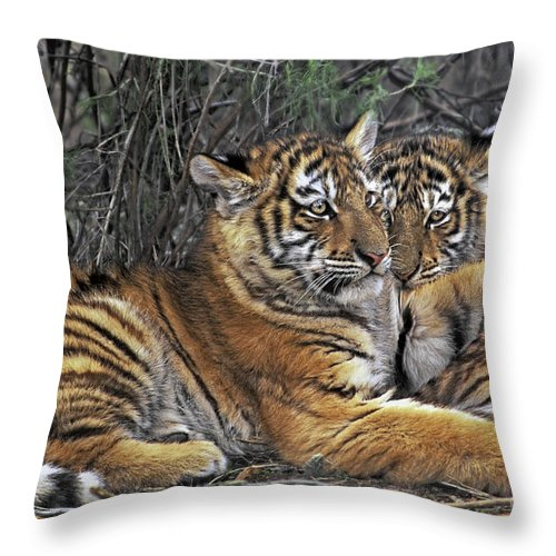 Siberian Tiger Throw Pillow featuring the photograph Siberian Tiger Cubs Endangered Species Wildlife Rescue by Dave Welling
