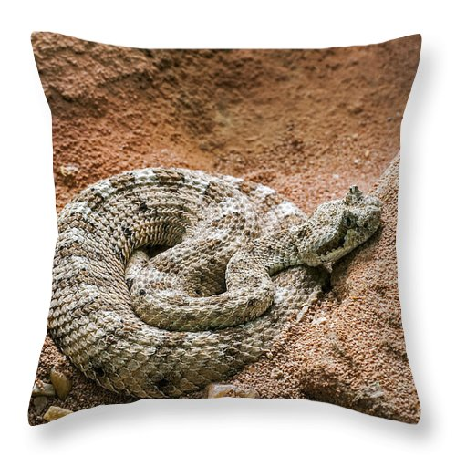 Sidewinder Throw Pillow featuring the photograph Sidewinder 2 by Arterra Picture Library