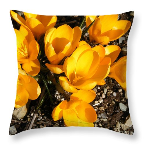 Yellow Crocus Throw Pillow featuring the photograph Signs Of Spring by Barbara Griffin