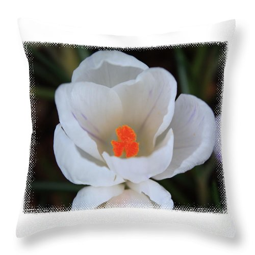 Flowers Throw Pillow featuring the photograph Signs Of Spring by Steven Baier