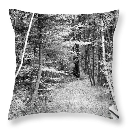 Forest Throw Pillow featuring the photograph Silence by Crystal Harman