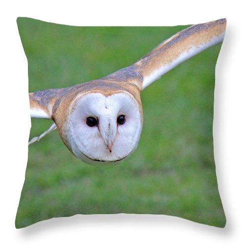 Barn Owl Throw Pillow featuring the photograph Silent Approach by Randy Hall