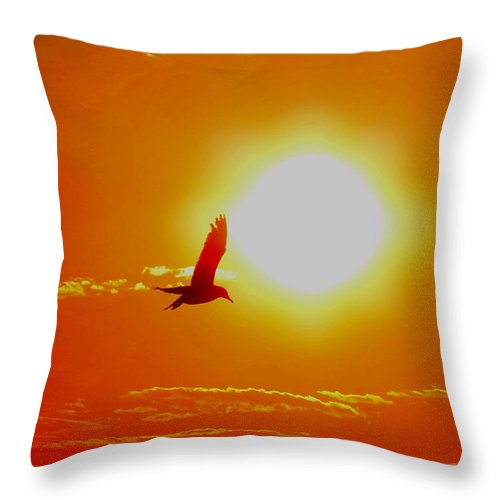 Sun Throw Pillow featuring the photograph Silhouetted Seagull by Stephen Melcher
