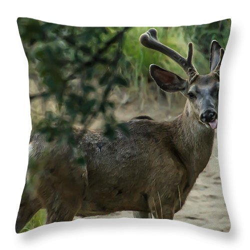 White-tailed Deer Throw Pillow featuring the photograph Silly Deer by Stacy Fortson
