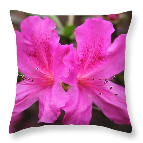 Pink Throw Pillow featuring the photograph Silver Balls by Rich D'Amato