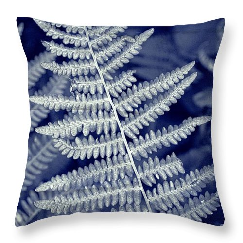 Fern Throw Pillow featuring the photograph Silvery Fern by Tikvah's Hope
