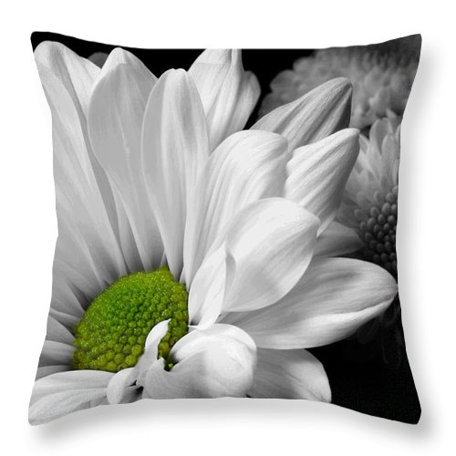 Daisy Throw Pillow featuring the photograph Simplicity by Michael Eingle