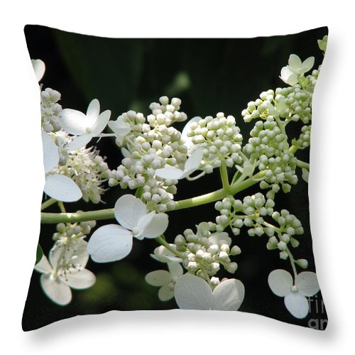 Hydrangea Throw Pillow featuring the photograph Simply by Amanda Barcon