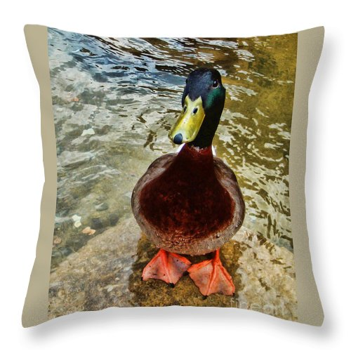 Duck Throw Pillow featuring the photograph Simply Ducky by Kelley Freel-Ebner