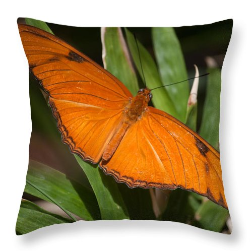 Butterfly Throw Pillow featuring the photograph Simply Orange by Ronald Lake