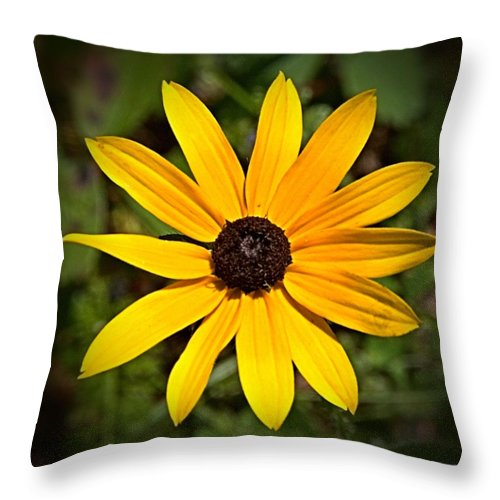Flower Throw Pillow featuring the photograph Simply Susan by Valerie Kirkwood