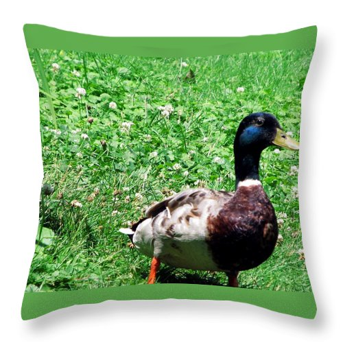 Mallard Throw Pillow featuring the painting Singer In Life by Robert Nacke