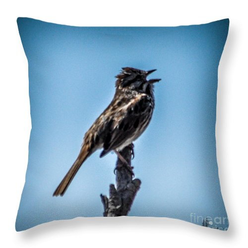 Sparrow Throw Pillow featuring the photograph Singing Song Sparrow by Ronald Grogan