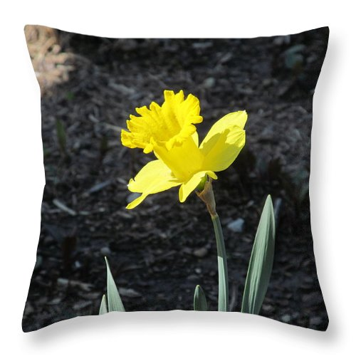 Flower Throw Pillow featuring the photograph Single Daffodil by Tina M Wenger