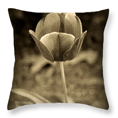 Tulip Throw Pillow featuring the photograph Single Tulip by Kelly Nowak