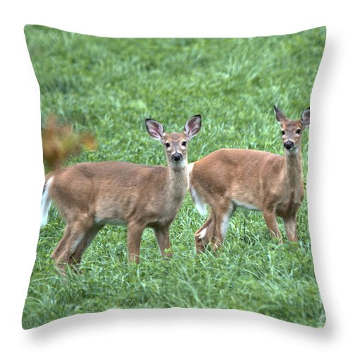 Throw Pillow featuring the photograph Sisters by Cheryl Baxter