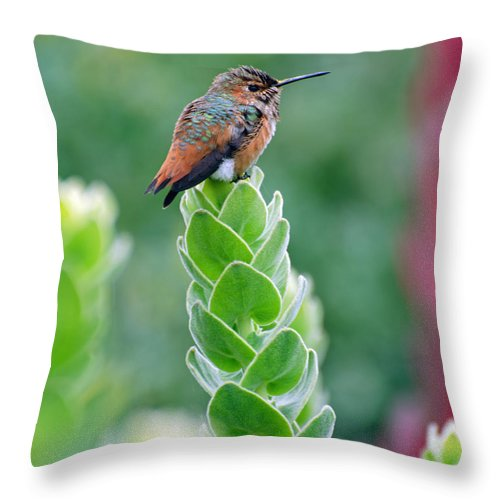 Bird Throw Pillow featuring the photograph Sit And Hum by Jean Booth