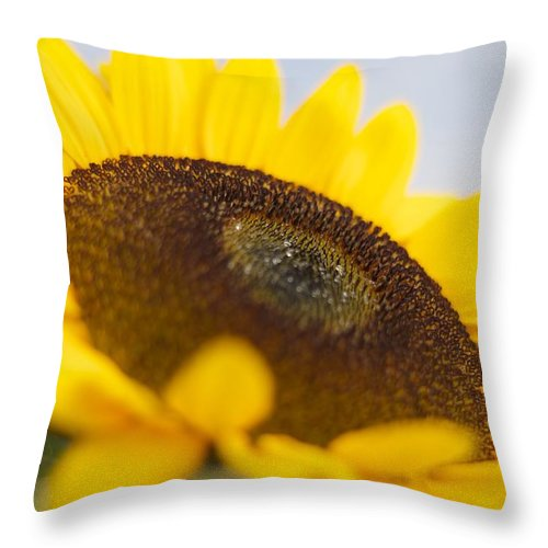 Sunflower Throw Pillow featuring the photograph Sitting In The Sun by Nicole Jeffery